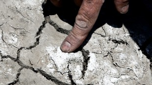 In this photo taken Monday, May 18, 2015, farmer Gino Celli checks salt from irrigation water that has dried on the land he farms near Stockton, Calif. Celli, who farms 1,500 acres of land and manages another 7,000 acres, has senior water rights and draws his irrigation water from the Sacramento-San Joaquin River Delta. Farmers in the Sacramento-San Joaquin River Delta who have California's oldest water rights are proposing to voluntarily cut their use by 25 percent to avoid the possibility of even harsher restrictions by the state later this summer as the record drought continues.(AP Photo/Rich Pedroncelli)