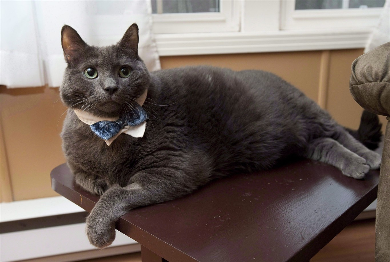 New Brunswick's world-famous fat cat dies after making ...