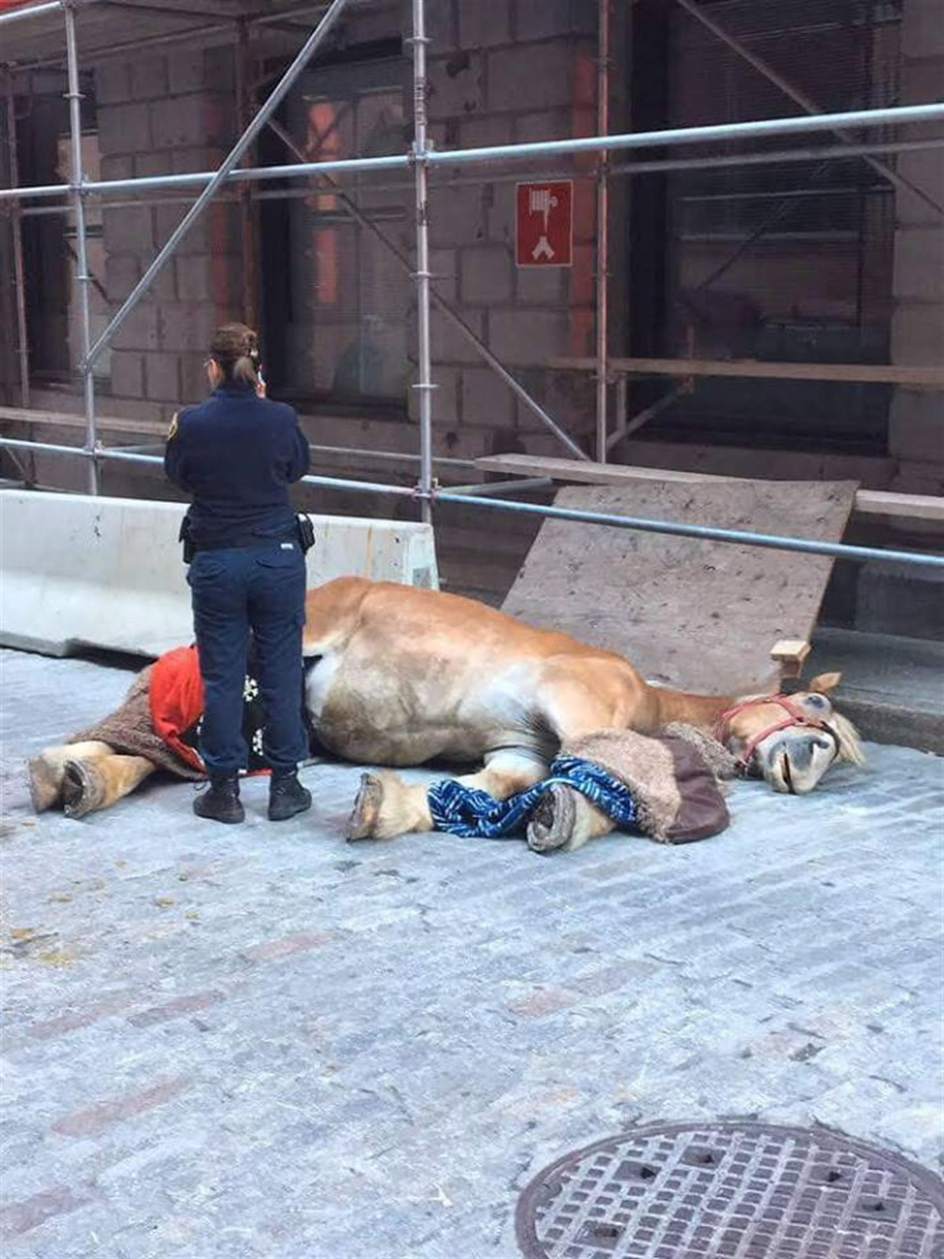 Death Of Caleche Horse Further Proof Industry Needs To Wind Down How Build A Barn Hometips Collapsed Is Seen On The Streets Montreal Sunday November 4 2018 In This Handout Photo Montreals Mayor Says Shes More Convinced Than Ever
